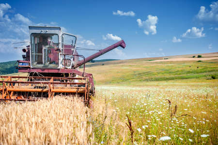 industrial harvesting process with a specialized combine harvesting crops of wheat and grain photo