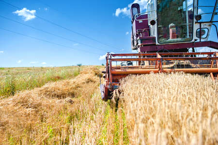 agriculture machinery: industrial vintage harvesting machinery in wheat crops  Rural agriculture and farming with vintage machines