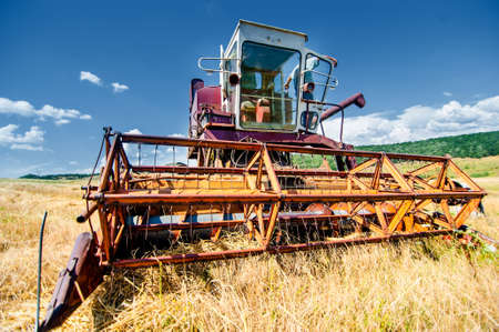 threshing: Crop harvesting at th field with professional harverster