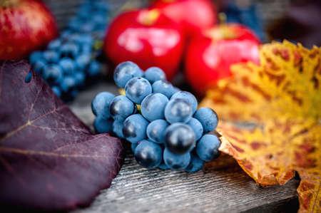 contryside: fresh ripe grapes at autumn harvest Stock Photo