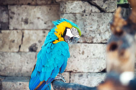 aviary: portrait of macaw parrot sitting in forest. aviary details of rainforest