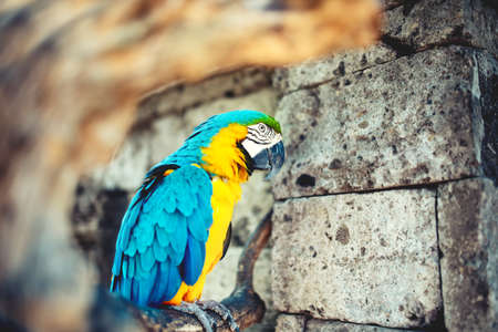 amazonian: close-up portrait of wild parrot, macaw parrot in amazonian rainforest