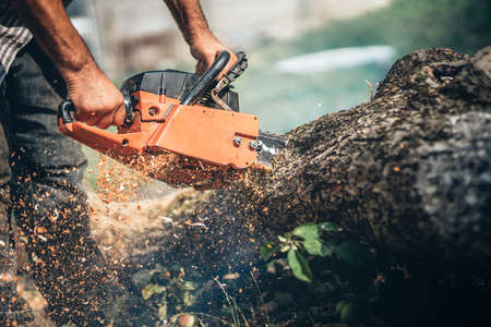 Male lumberjack cutting tree using professional equipment, gasoline powered chainsaw Standard-Bild - 90240957