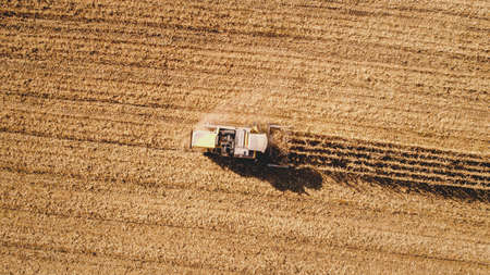Aerial view of harvester collecting corn, harvesting the fields