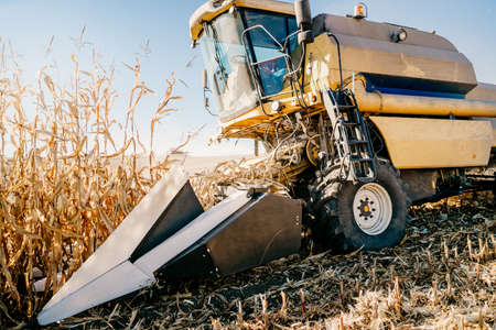 Details of Combine harvesting corn, working the fields during autumn harvest
