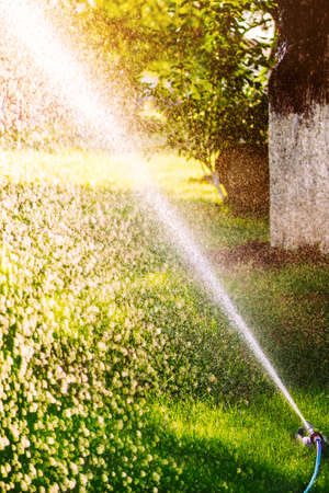 Lawn sprinkler spraying water over green grass on a summer evening Stockfoto