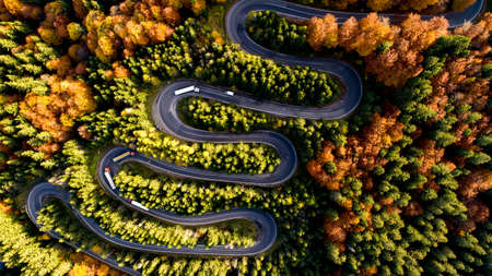 Top view of beautiful asphalt roadway and orange trees during autumn season. Curvy forest road