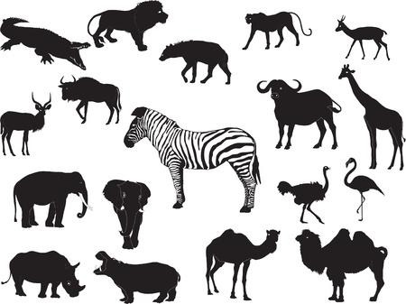 Animales colección africana Ilustración de vector
