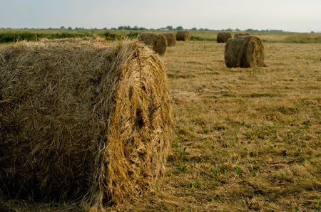 hay bales: Hay bales in the field