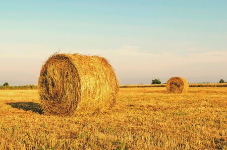 hay bales: Agriculture landscape with hay bales on a field
