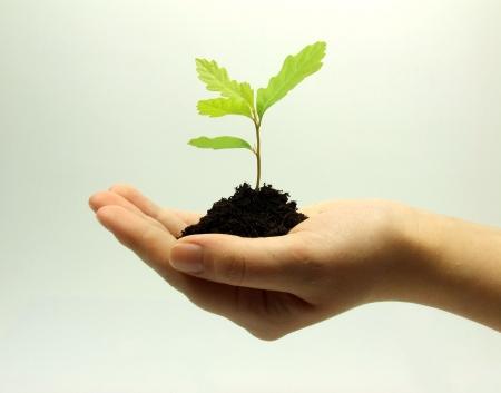 thrive: Growth theme