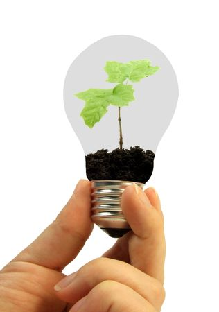 Lightbulb with plant in hand Stock Photo