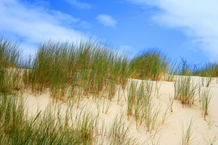 remoteness: Grass on dunes, Slowinski National Park, Leba, Poland Stock Photo
