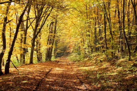 Pathway in autumn forest, Gdynia, Poland Stock Photo