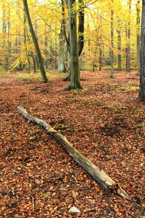 Autumn forest in Gdynia, Poland Stock Photo