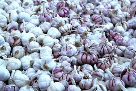 Fresh garlic in street market, Tiznit, Marocco