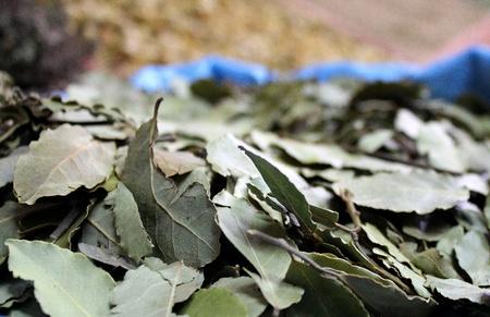 Laurel leafes, Agadir souk, Morocco Stock Photo