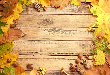 Autumn background with leafs mushrooms and acorns on wooden board photo
