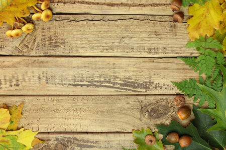 Autumn background with color leafs and acorns on wooden board photo