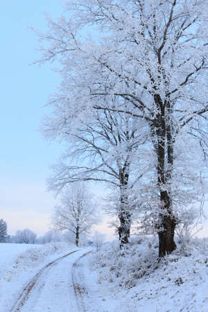 Cold winter landscape with frosty trees and country road