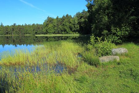 lobelia: Lake in the forest, Kashubian Region, Poland Stock Photo