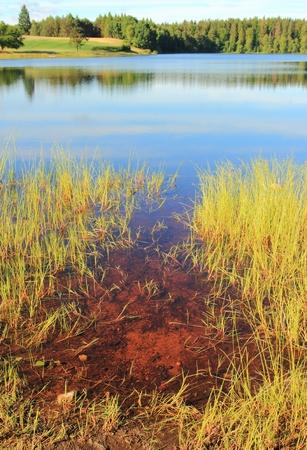 lobelia: Little lobelia lake in the forest, Kashubian Region, Poland