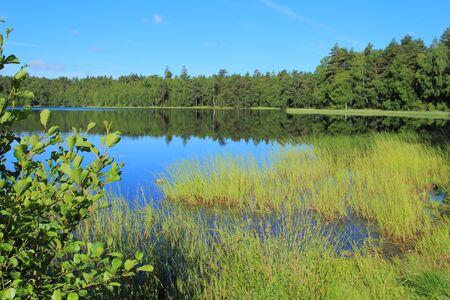 lobelia: Small lobelian lake in the forest, Kashubian Region, Poland