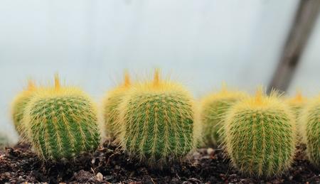 round: Round cactus