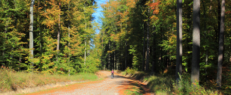 Autumn forest. Gravel road in a forest. Pomerania. Poland