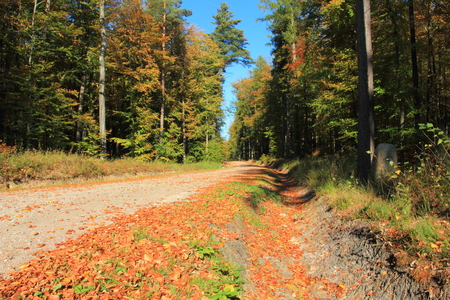 Golden autumn. Gravel road in a forest. Pomerania region. Poland Stock Photo
