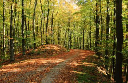 Forest autumn fall season