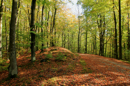 Autumn in forest. Pomerania region. Poland