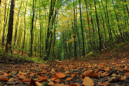 Forest. Autumn. Poland