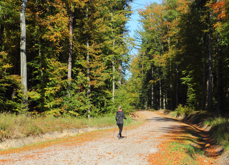 Autumn forest. Hiker walking in a autumn forest. Poland