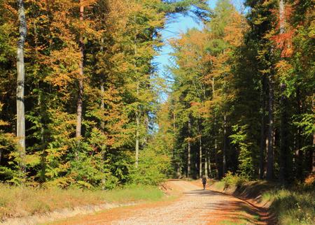 Autumn season. Road in a autumn forest. Poland