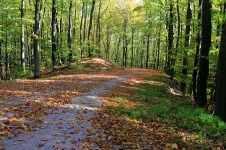 Forest in autumn. Poland.