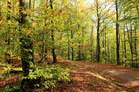 Autumn. Polish golden autumn. Forest in autumn. Poland Stock Photo