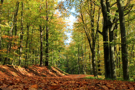 Autumn. Fallen leafs in a forest. Poland Stock Photo