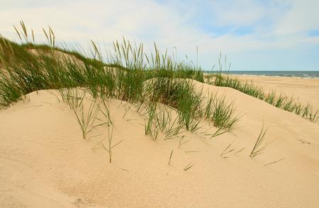 Moving sand dunes in Slowinski National Park, Poland