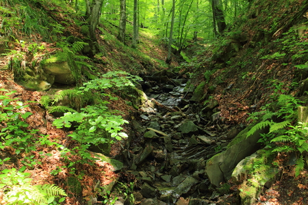 Little stream valley in wild forest in Bieszczady Mountains, Poland