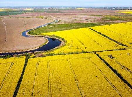 Fields of yellow rape growing in spring, Zulawy Wislane, Poland
