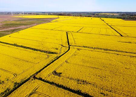 Aerial view on fields with rape, Zulawy Wislane, Poland