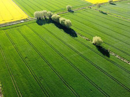 Green fields in Zulawy Wislane, Poland Standard-Bild - 148688846