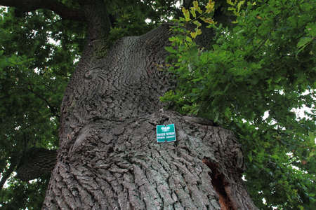 Natural monument sign on an old oak tree, Poland