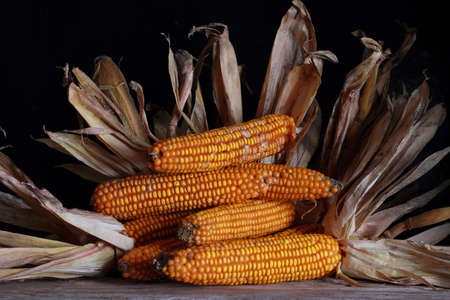 Drying corn cobs against a black background