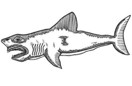 encounter: Shark Illustration