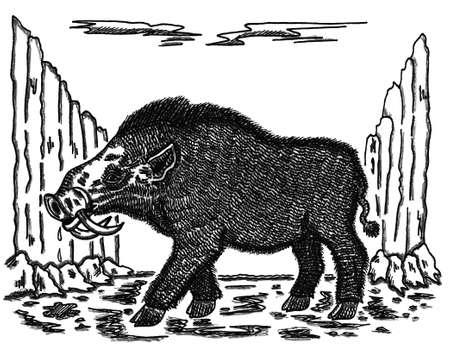 hog: Erymanthian Boar