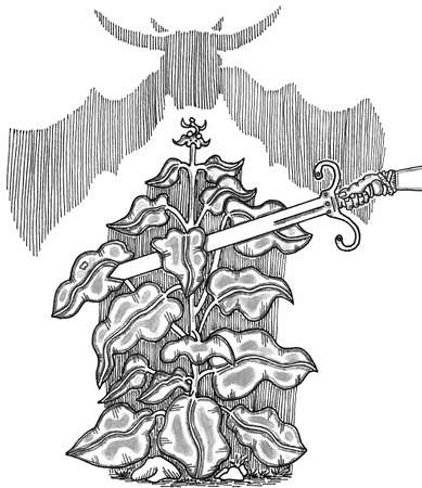 Dragonsbane Plant Vector illustration.