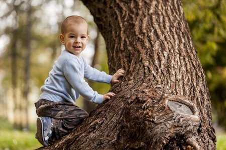 Little boy on the tree photo