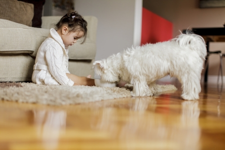 Little girl with a dog photo